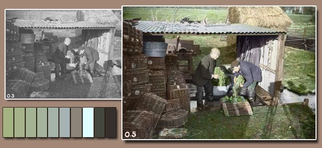 Watercress Packers - Old Photo Colouring for The Watercress Company